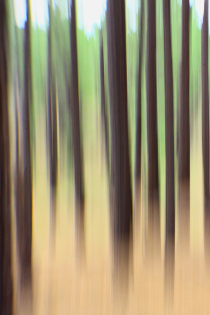 pine trees by blueberry1222
