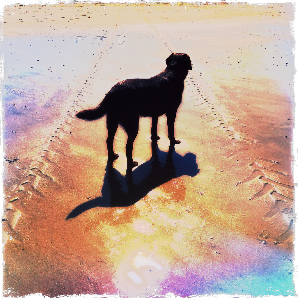 Me and My Shadow by jocasta
