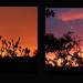 Change of colour. by shirleybankfarm