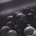 grapes by nanderson
