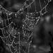 Wondrous Wednesday web by berelaxed