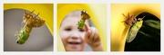 20th Aug 2015 - Emerging Cicada