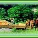 The Hard-Working Amish