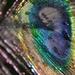 Bokeh feather by ziggy77