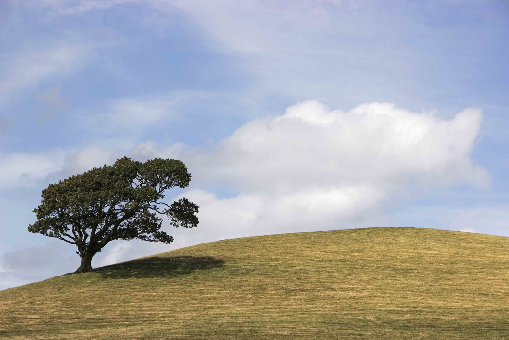 Lone Tree by shepherdman