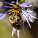 Buried Bee Vignette