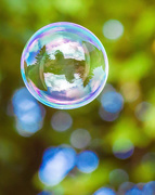 25th Aug 2015 - 25th August 2015     -Bubble and bokeh