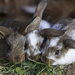 Bunny Love by lily