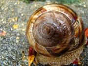 26th Aug 2015 - Snail Paterns