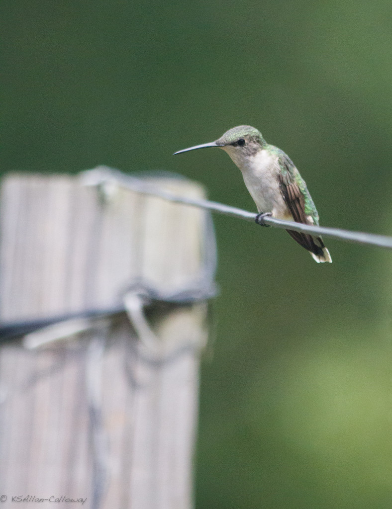 Checking the feeder for yellow jackets by randystreat