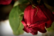 28th Aug 2015 - wilted