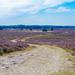 Heather fields by stiggle
