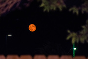 30th Aug 2015 - Red Moon Rising