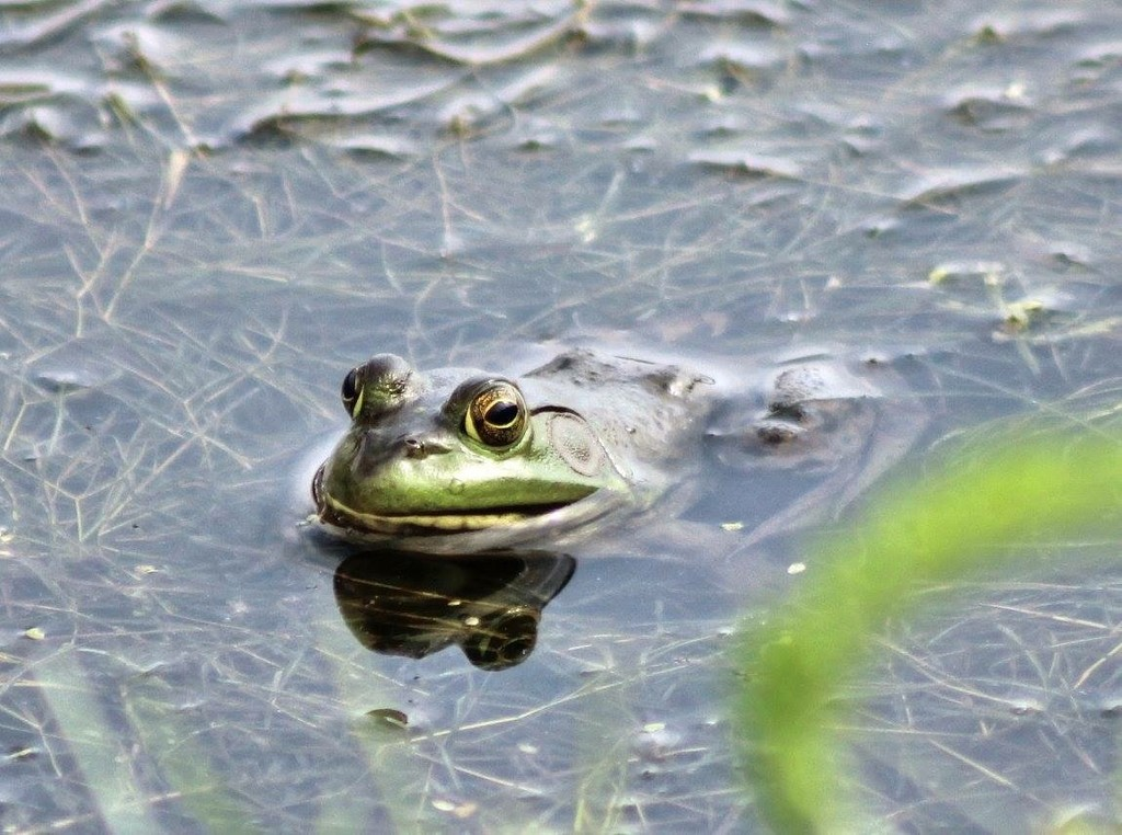Sitting Frog by not_left_handed