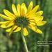 Good Day Sunshine by milaniet