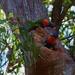 'Mumma' AND 'Poppa' guarding the nest... by happysnaps