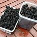 Urbanberries