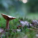 NF-SOOC-2015 - Day 2: Toadstool and Pinecones by vignouse