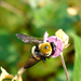 Big Bee, Little Flower