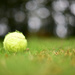 NF-SOOC-2015 - Day 4: Tennis Ball and Bokeh by vignouse