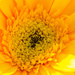 So HAPPY! by gigiflower