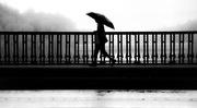 5th Sep 2015 - Rain Man