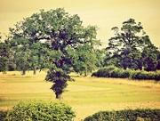 3rd Sep 2015 - Trees