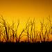 Burnt sunrise by bella_ss
