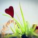 I [heart] Aloe Vera