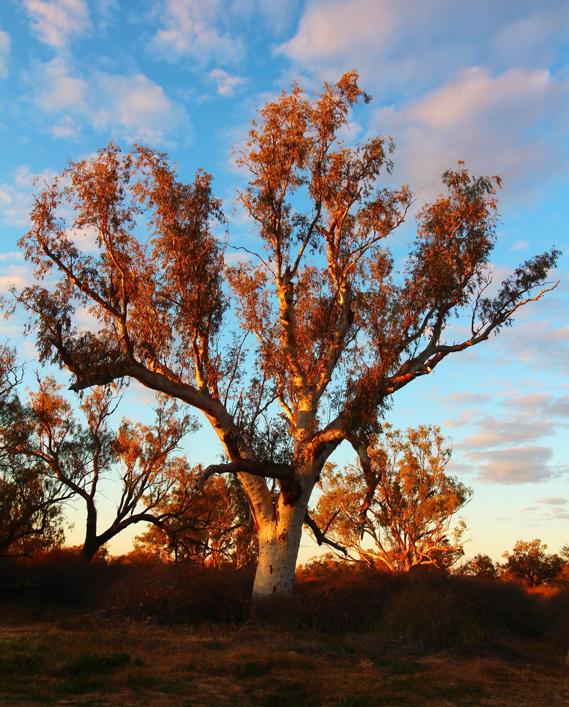 Morning Light - Innamincka by terryliv