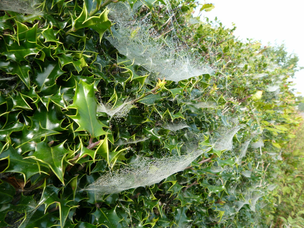 Cobweb hammocks.  by shirleybankfarm