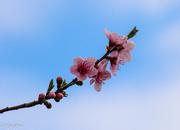 6th Sep 2015 - Blossom time