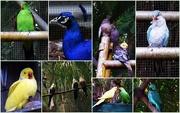 10th Sep 2015 - A Collection of Birds.