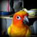 Phoenix by alia_801