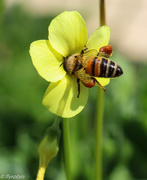 13th Sep 2015 - Bee greedy or bee working hard?