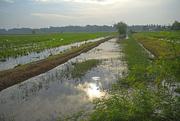 9th Sep 2015 - Early Morning sun rice paddy Kedah