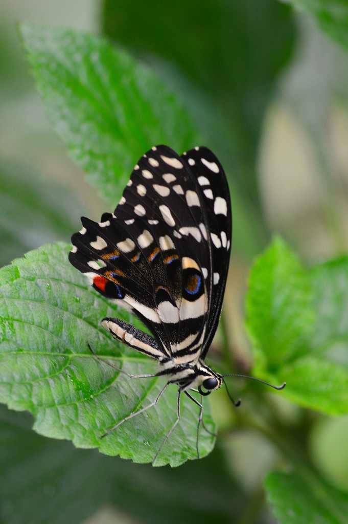 The Magic of Life Butterfly House. by darrenboyj