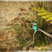 Kingfisher by rustymonkey