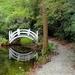 A favorite walk in Magnolia Gardens, Charleston, SC by congaree