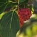 Dogwood Tree Berry by loweygrace