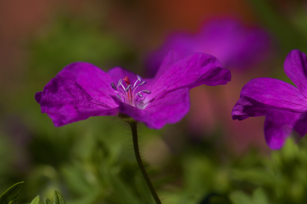 A spot of colour*** by lwain
