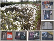20th Sep 2015 - A Sea of Flowers and Books