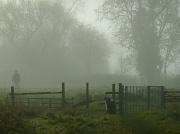 19th Nov 2010 - The Dog In The Fog