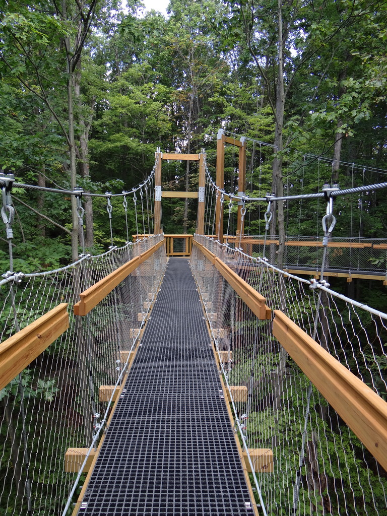 The Canopy Walk by brillomick