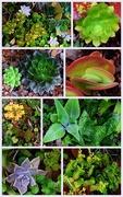 21st Sep 2015 - Succulents...