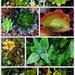 Succulents... by happysnaps