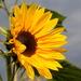 Cheerful bloom