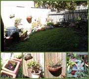 22nd Sep 2015 - Spring In My Garden