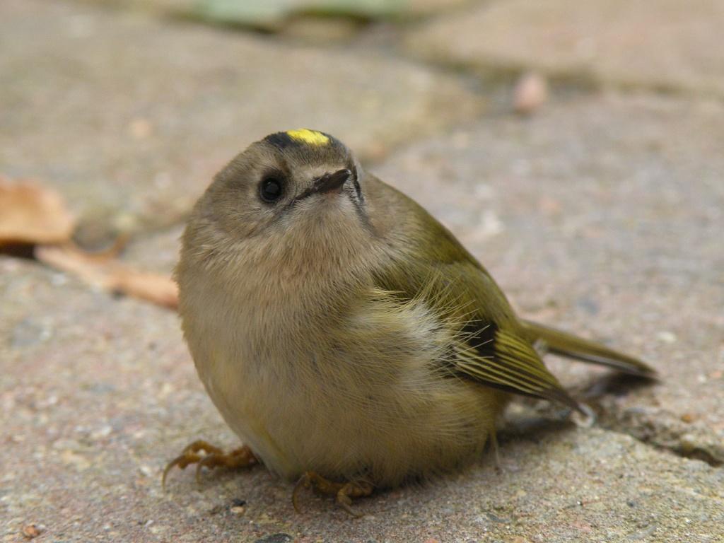 Bird by manek43509