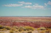 20th Sep 2015 - Desert Paint